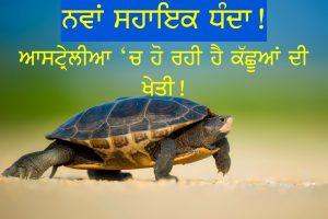 Episode 124 | Pendu Australia | Pumpkin & Turtle Farming