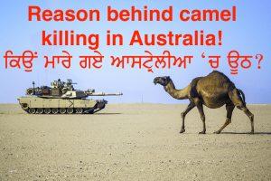 Episode 132 | Pendu Australia | Camel Hunting/Killing in Australia