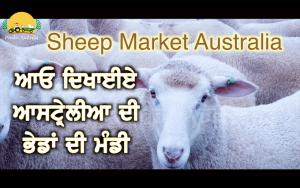 Episode 133 | Pendu Australia | Sheep Market Australia