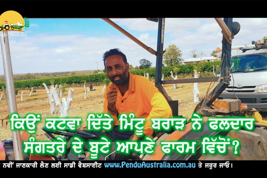Episode 134 | Pendu Australia | Orange Tree Grafting