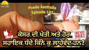 Episode 147 | Pendu Australia | Saffron Farming in Australia