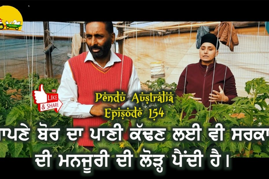 Episode 154 | Pendu Australia | Vegetables Farming By A Punjabi Girl