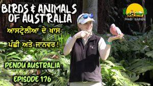 Episode 176 | Pendu Australia | Special Bird and Animals of Australia